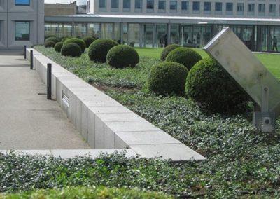 Buksbom plantning ved Geist hovedkontor