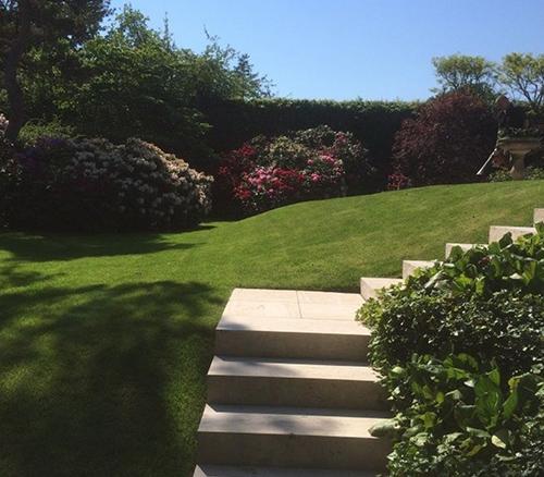 Græsplæne og rhododendron